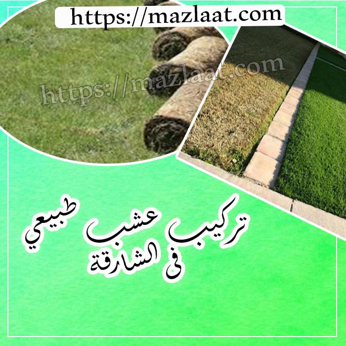 تركيب عشب طبيعي الشارقة