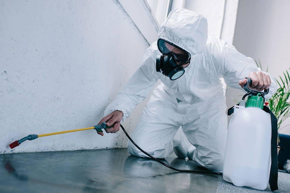 أرخص شركة مكافحة حشرات الفجيرة  0563350658
