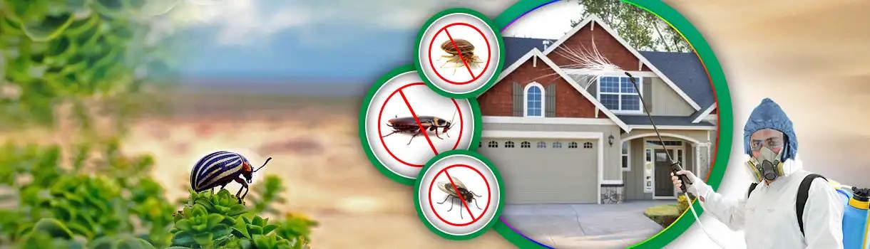 مكافحة حشرات بالفجيرة_ ابادة افات بالفجيرة