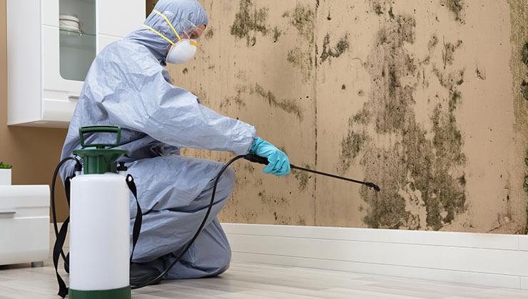 شركة مكافحة حشرات عجمان 0563350658