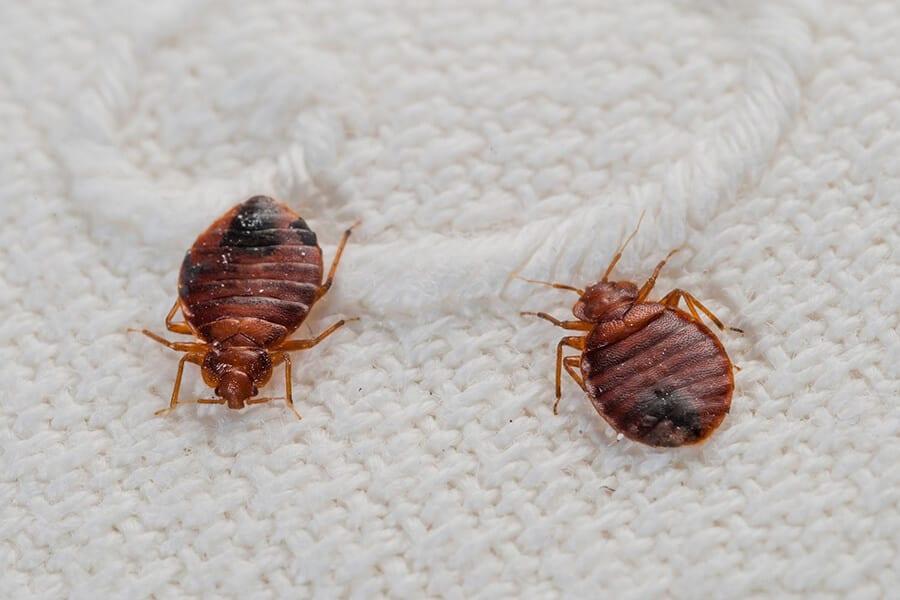 مكافحة حشرات ام القيوين _ ابادة قوارض بام القيوين
