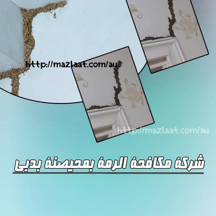 شركة مكافحة الرمة محيصنة دبي