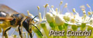 شركات مكافحة الحشرات بخورفكان