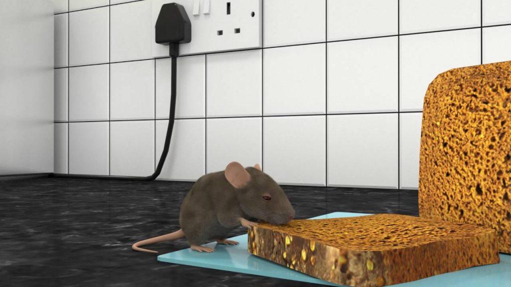 شركة مكافحة الفئران بخورفكان