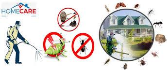 شركة مكافحة حشرات فى عجمان