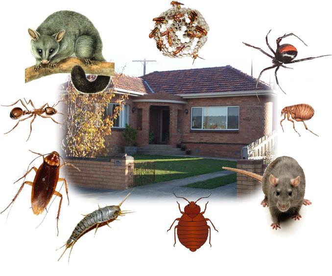 أرخص شركة مكافحة حشرات فى دبى