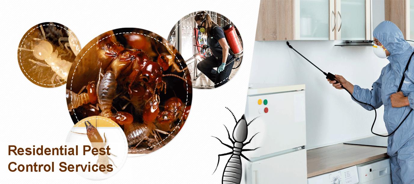 مكافحة حشرات الشارقة